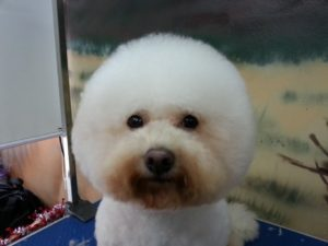 Awesome Pawsome Dog Grooming